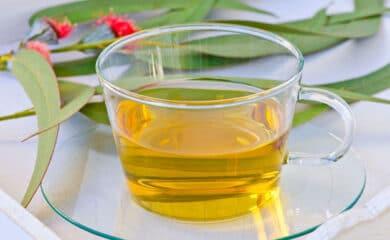 receta-infusión-de-eucalipto